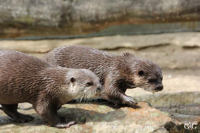 Besuch Zoo Berlin 31.05.201517