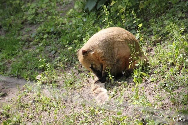 Besuch Zoo Berlin 31.05.201514