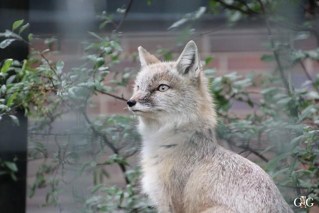 Besuch Zoo Berlin 31.05.201548