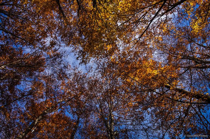 Techo a base de copas de hayas en la Selva de Irati.