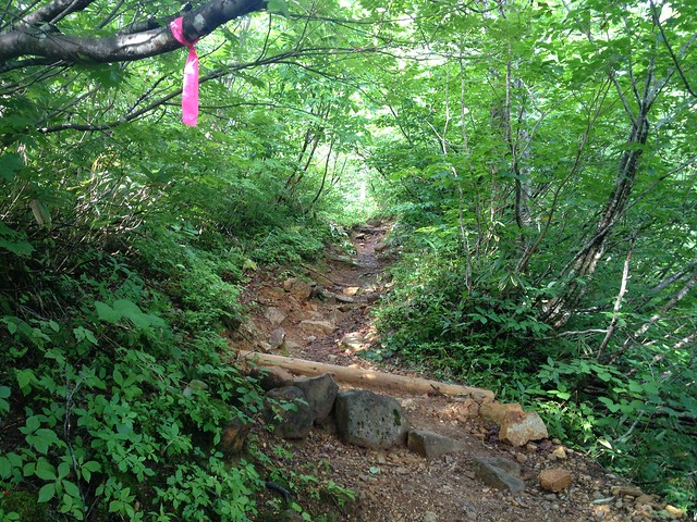 白山 平瀬道 登山道 石段