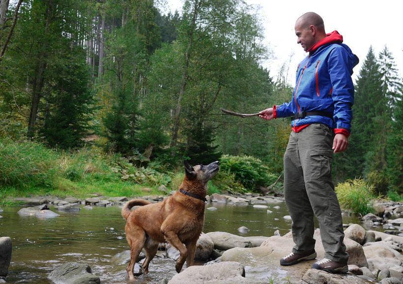 pies park narodowy