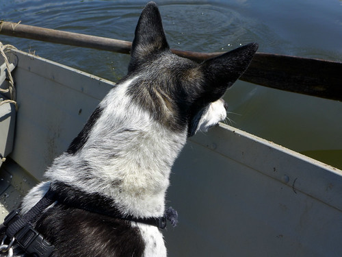 2015-05-31 - Peedee on a Boat - 0022 [flickr]