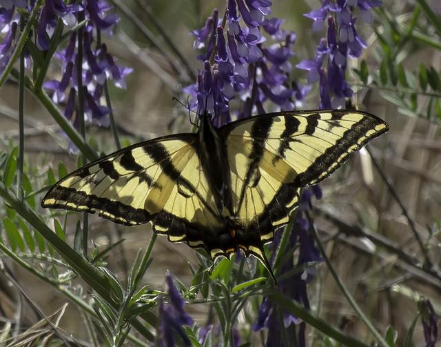 butterfly-904