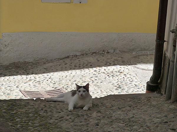 chat de san remo
