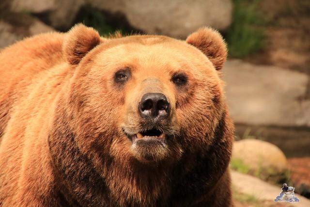 Tierpark Hagenbeck 21.05.2016  075