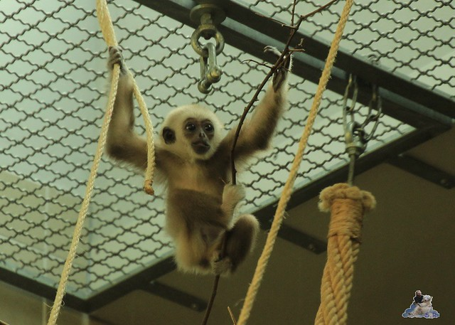Tierpark Berlin 17.05.2015 71
