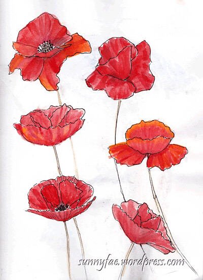 sketching-poppies