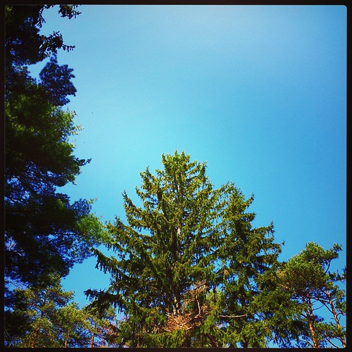 Green pines and the deep blue sky #EmeryPark #ErieCounty #wny