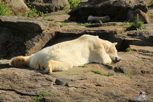 Zoo Berlin 13.05.2015  21