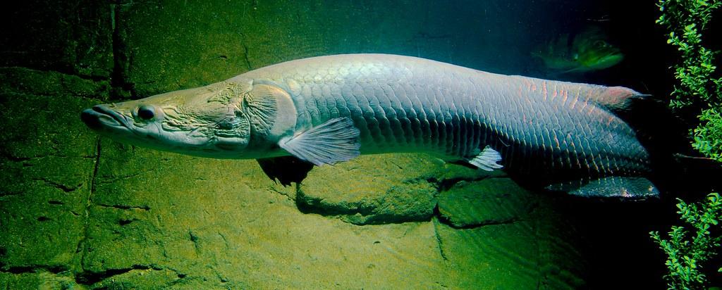 Fish_77