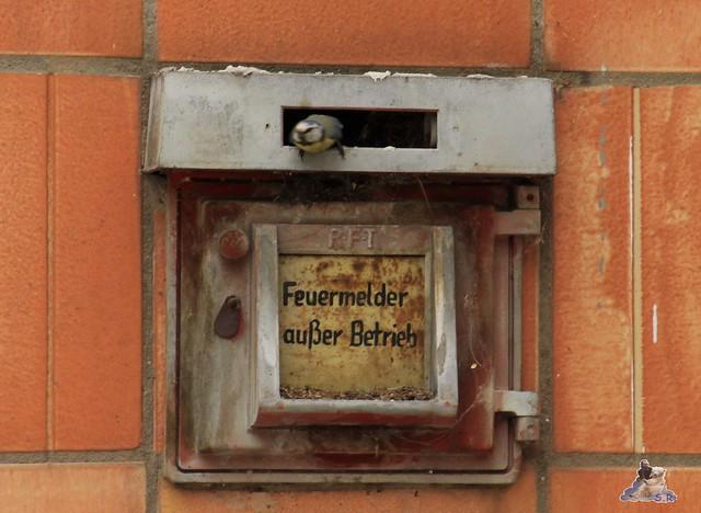 Tierpark Berlin 10.05.2015  26
