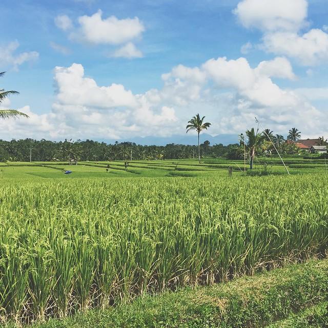 Bali- Ubud and Seminyak