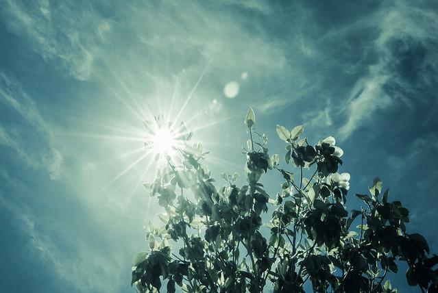 Sunburst   May 11am