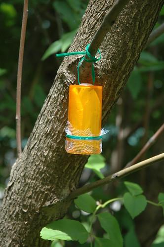 Oobinator 2.0 on a tree