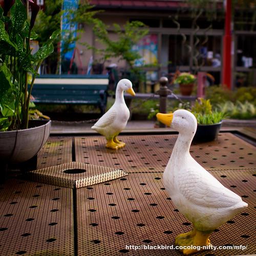 Birds #01