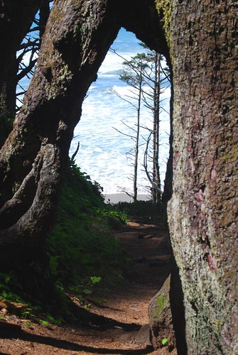 Hiking Path Overpass