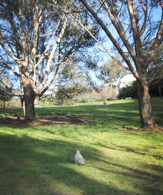 Presidio Park