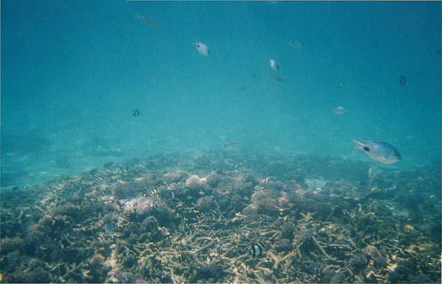 海床。圖片來源:oldandsolo(CC BY 2.0)