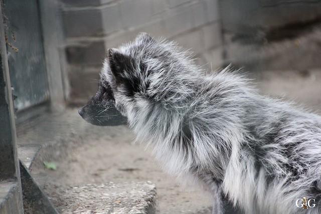 Besuch Zoo Berlin 31.05.201545