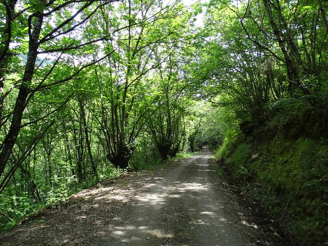 Pista en la ruta PR-G 193 Ruta do Val de Quiroga