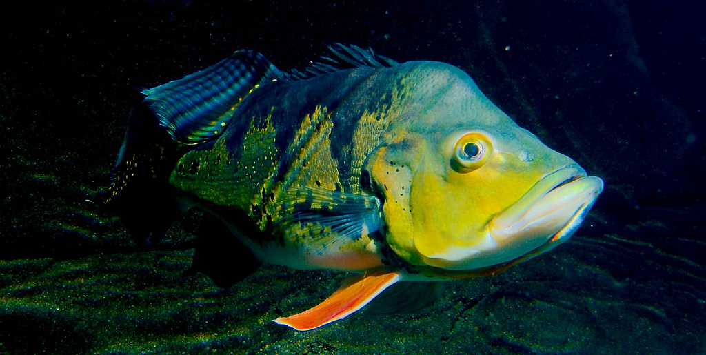 Fish_60
