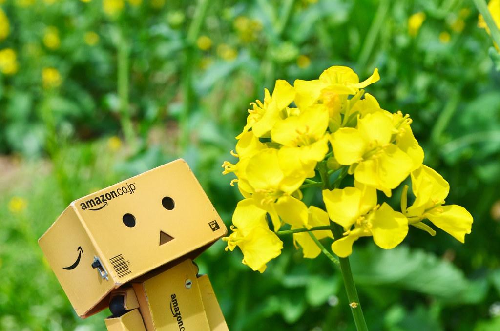 滝川菜の花まつり2015 (8)