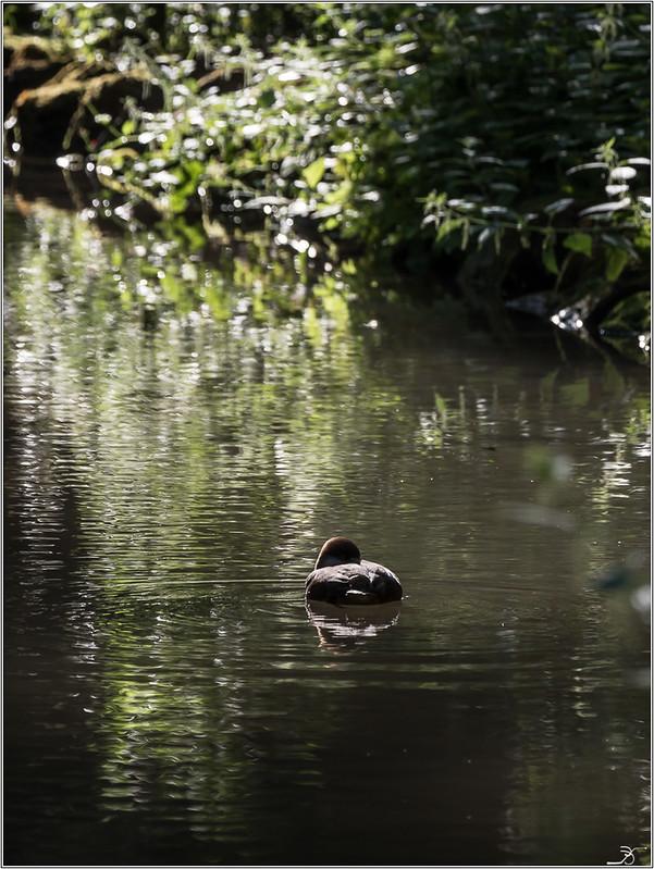 Moulin à Tan : oiseaux 28812038551_422fb205bc_c