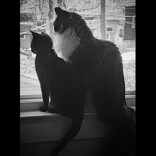 Mei-Mei & Oscar
