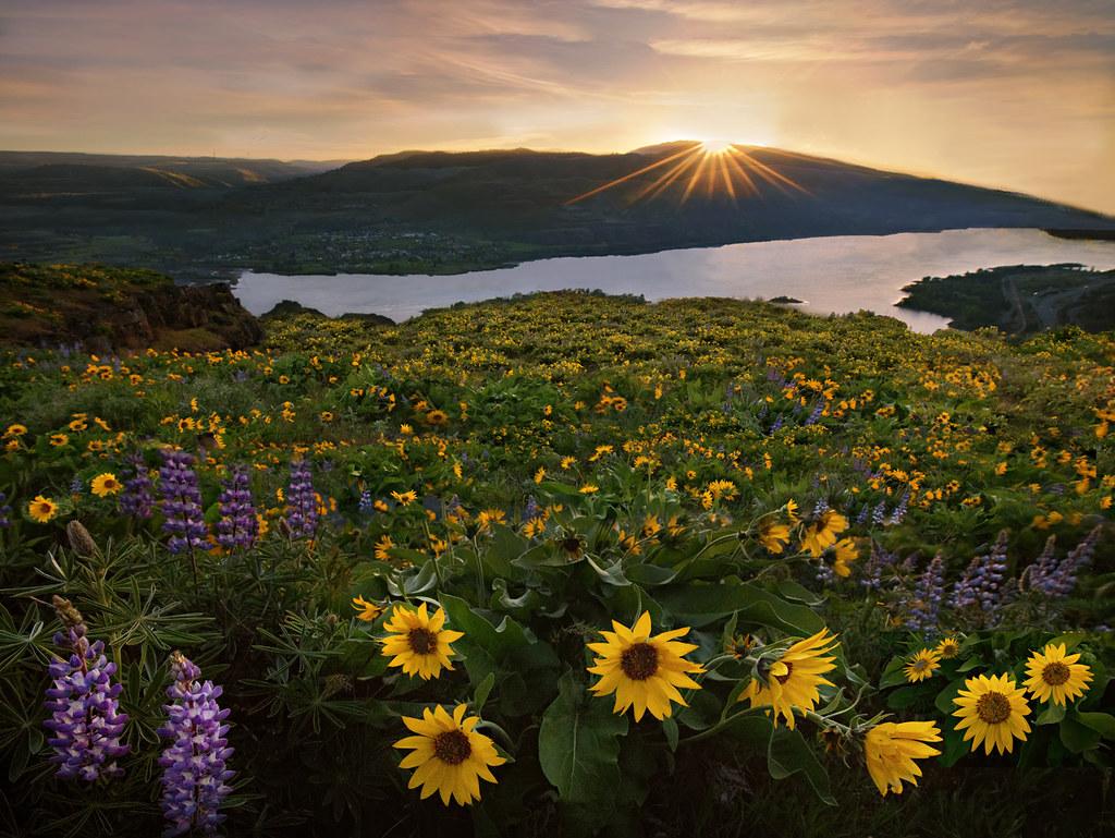 Depth of Field | Rowena, Oregon | Sapna Reddy Photography ...