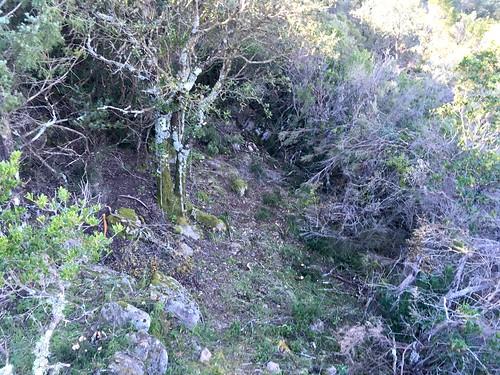 Le sentier du Pisciaronu dans la montée après le ruisseau de Ranedda