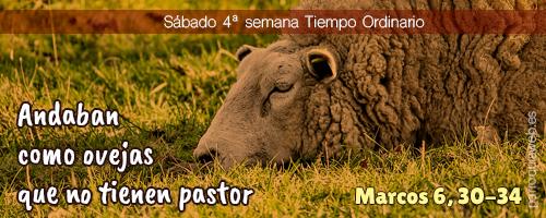 Andaban como ovejas que no tienen pastor