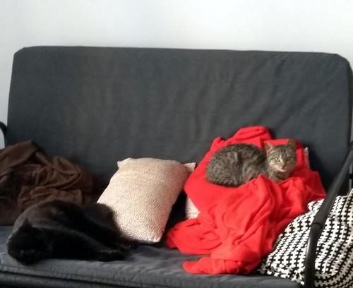 Candy, gatita parda confiada y amorosa nacida en Septiembre´18, en adopción. Valencia. ADOPTADA. 33236147878_506c46e11f