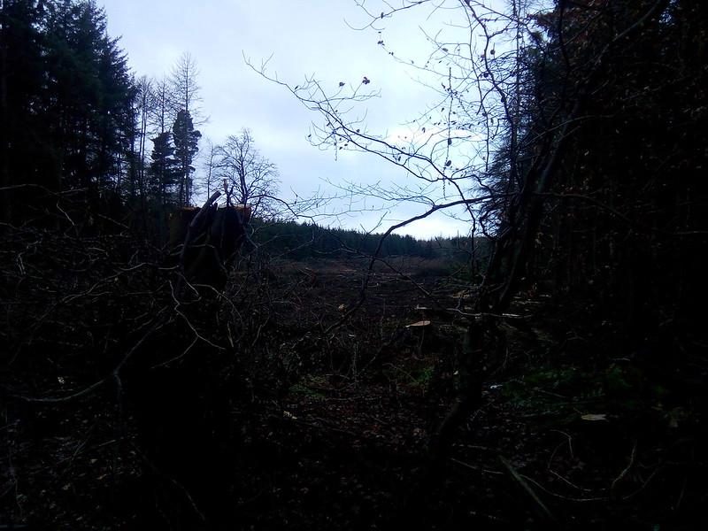 More trees being cut down 44619226420_fb2265c27b_c