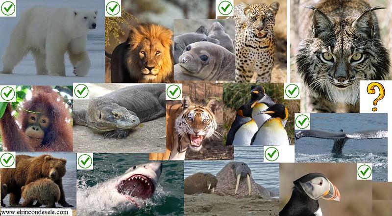 Algunos animales que he podido ver y fotografiar