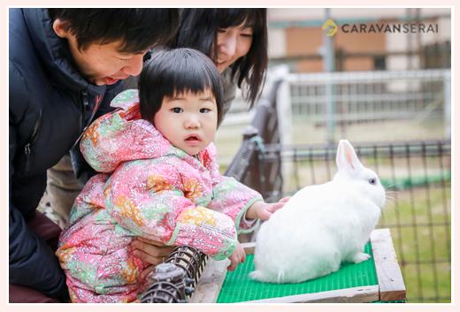 動物ひろばでウサギに触れる1才の女の子