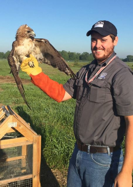 A USDA Wildlife Services airport biologist holding a red-tailed hawk