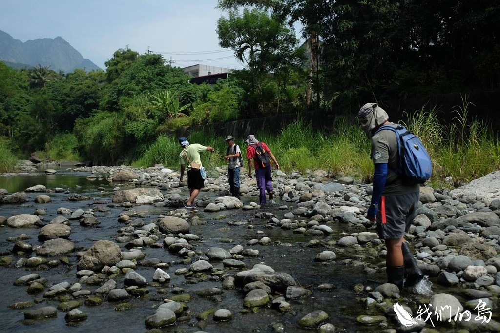 台東水保局跟著顧問公司現勘發現,可能是野溪施作的人工構造物,造成魚類無法洄游。