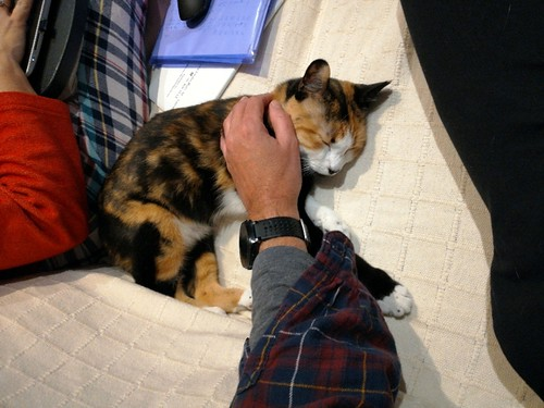 Yaiza, gatita tricolor guapísima y dulce esterilizada, nacida en Abril´18, en adopción. Valencia. ADOPTADA. 46953030501_127f5544e6