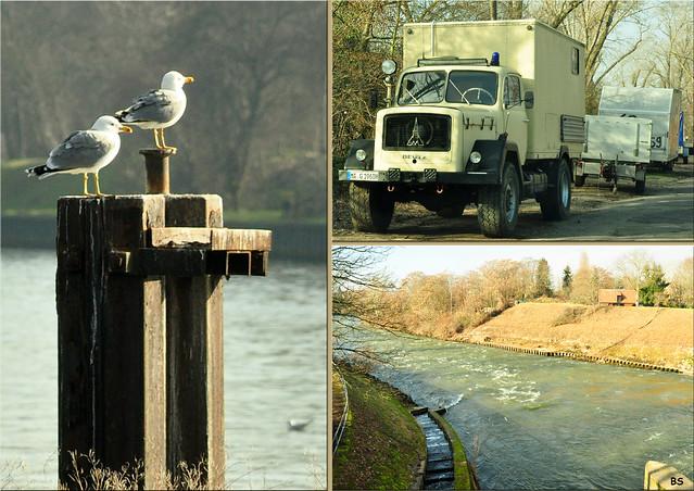 Februar 2019 - Die Mannheimer Maulbeerinsel zwischen Neckar und Neckarkanal ... Fotos: Brigitte Stolle
