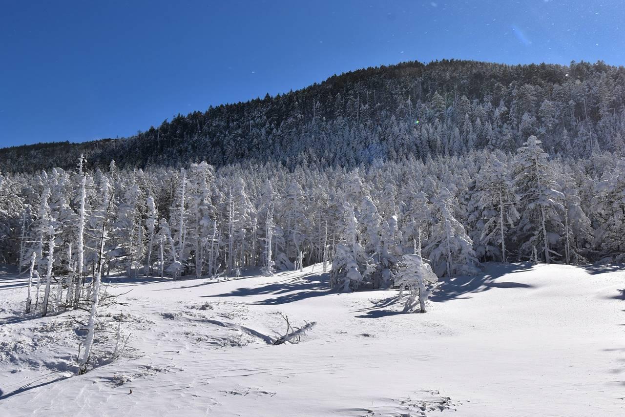 縞枯山の樹氷・クリスマスツリー