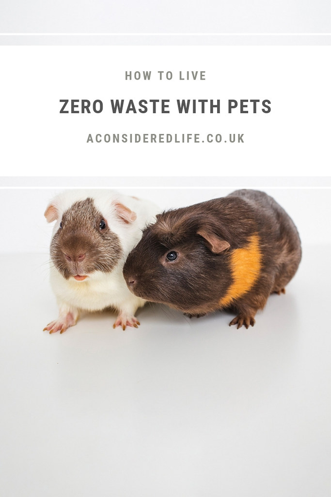 Living A Zero Waste Lifestyle With Pets