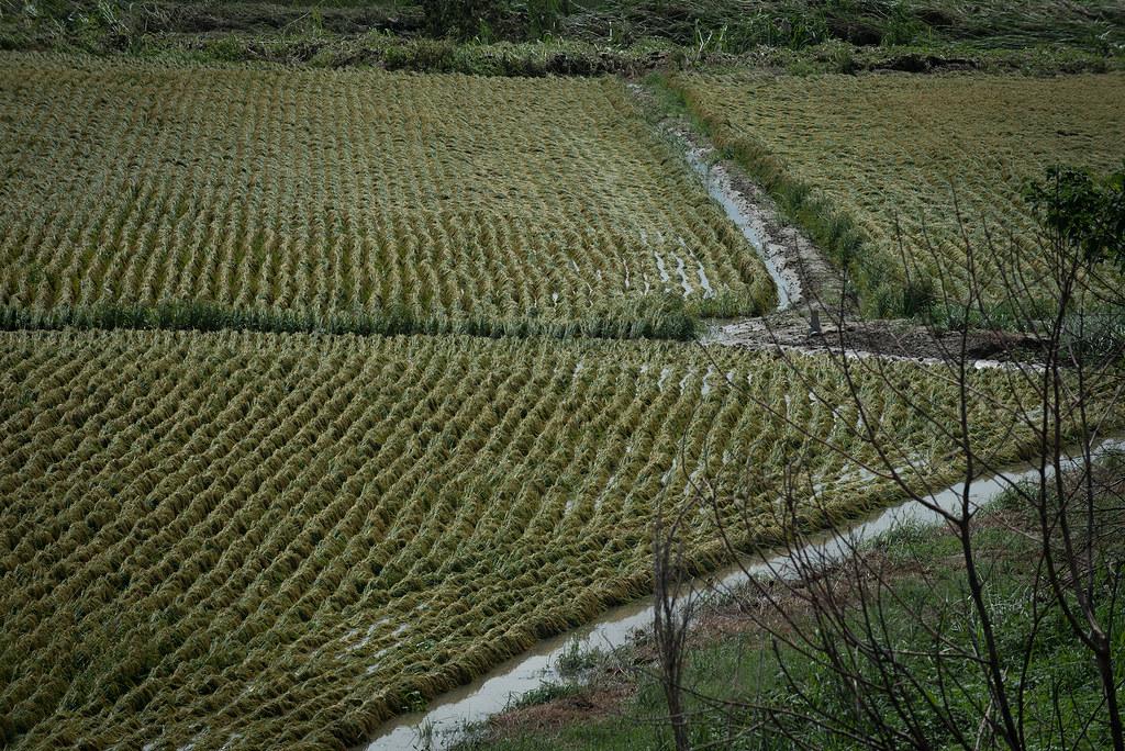 總統視察「嘉義縣陳井寮排水系統」及農損狀況(CC BY 2.0)