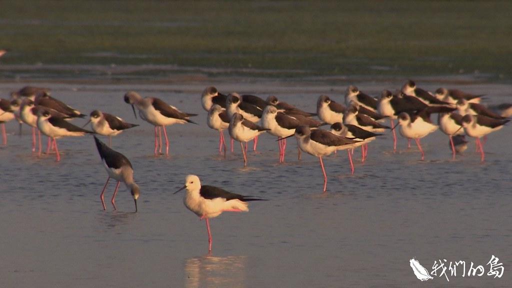 低度的人為利用,加上自然降雨,隨機營造出高低不同的水位,提供了候鳥多元的選擇。