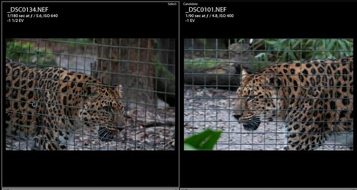 Screen Capture of leopard images