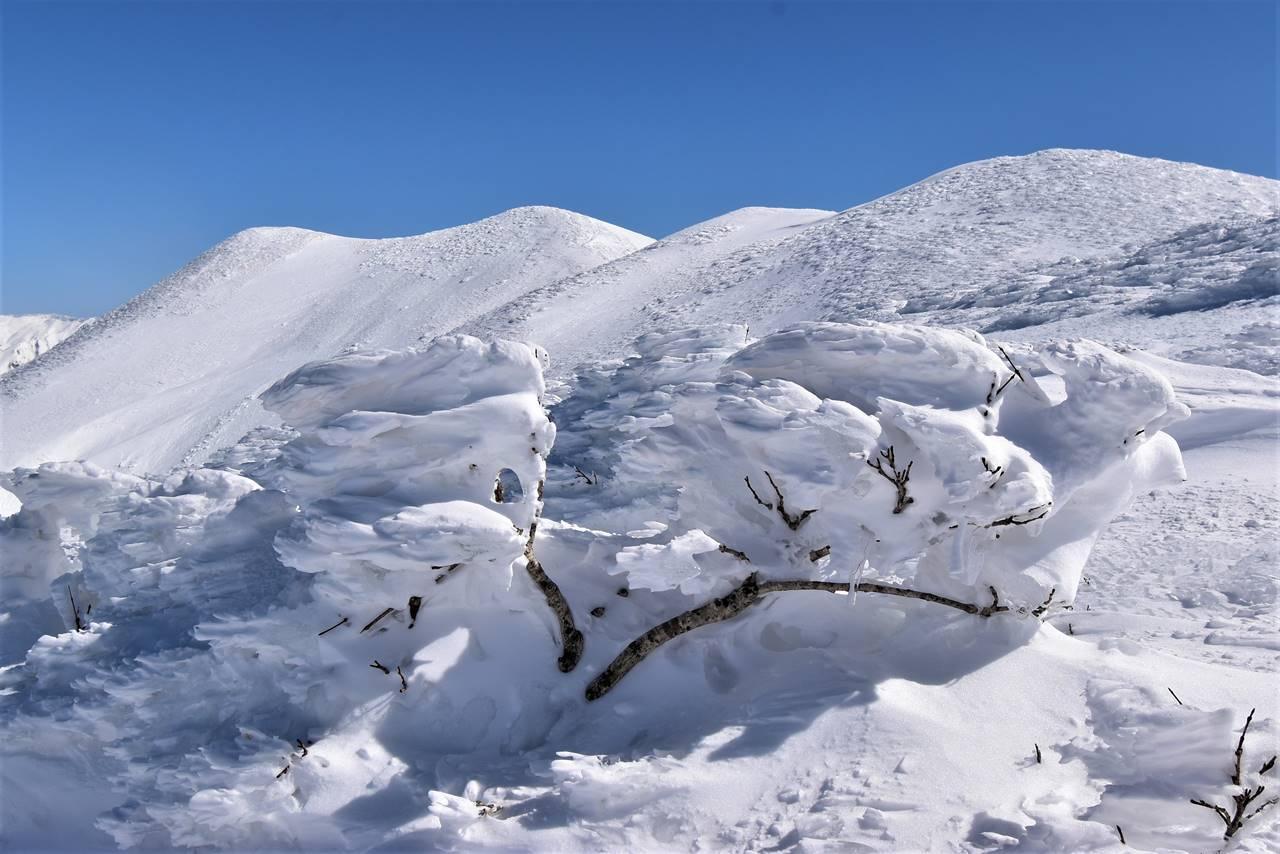 平標山~仙ノ倉山 稜線の樹氷