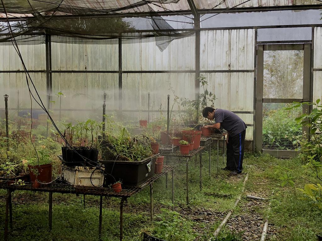 福山植物園苗圃將肩負台灣東北部一帶原生植物種園。攝影:廖靜蕙