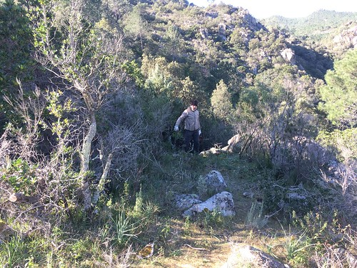 L'arrivée du sentier de Pisciaronu à l'embranchement PR6/Carbunari