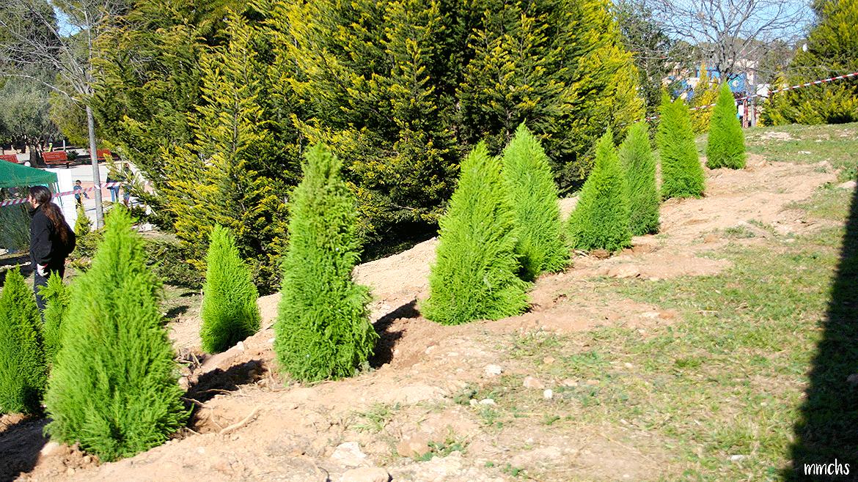 plantando un árbol en Paterna con niños