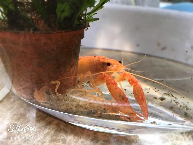 【龍蝦的啟示】昨日種種,譬如昨日死